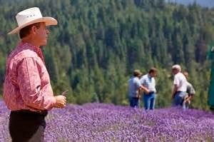 Gary on the lavender field