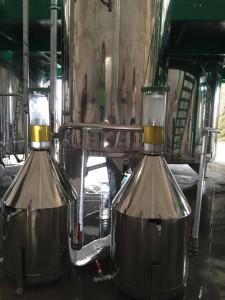 Helichrysum distillation